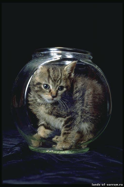 Классные картинки. Кошки, собачки, да ещё и рыбки!