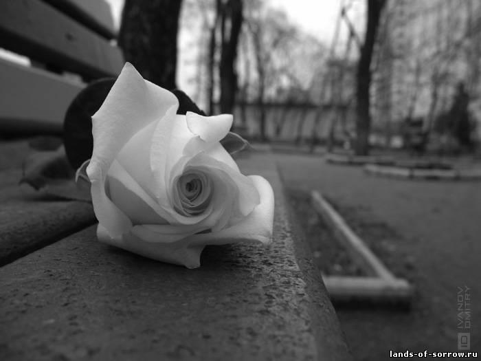 Красивый Чёрно белый фото арт.